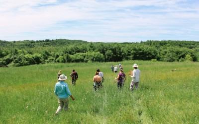 Wild Edibles Herb Walk and Workshop
